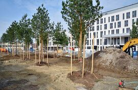 Im April werden Bäume im Außenbereich aufgestellt. (Foto: UKJ/Szabó)