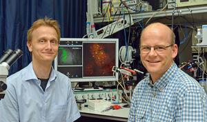 PD Dr. Knut Kirmse (l.) und Prof. Dr. Knut Holthoff verfolgten die Wirkung des Neurotransmitters GABA in vivo. Foto: Szabo/UKJ